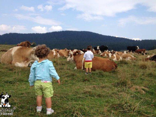 archivio-apt-valsugana-adotta-una-mucca-al-pascolo